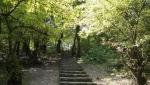 پارک جنگلی شهید بهشتی