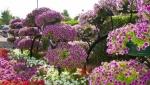 باغ گلها