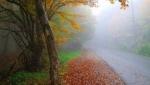 پارك جنگلی النگدره