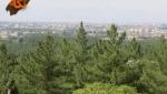 پارک جنگلی پردیسان قائم