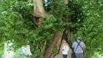 درخت رحمت