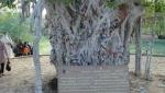 پارك درخت سبز