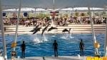 پارک دلفینها
