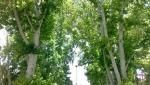 پارک جنگلی سیفیه