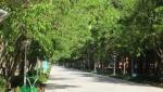 پارک ریحانه( بانوان)