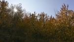 روستا دهبار