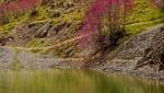 دره ارغوان