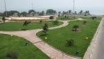 پارک زیتون