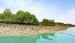 جنگل دریایی حرا