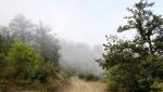 جنگل رودبارک