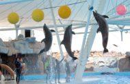 معرفی پارک دلفین کیش : آدرس و تصویر دلفیناریوم کیش