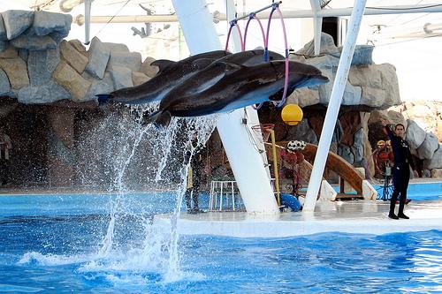 پارک دلفین ها در جزیره کیش