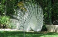 باغ پرندگان اصفهان : تصاویر و آدرس