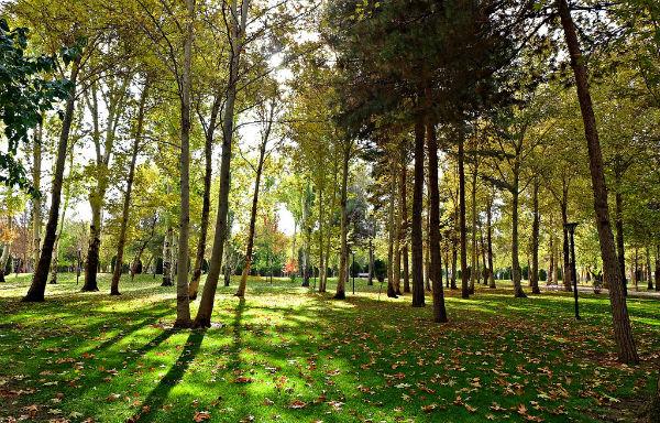 عکس پارک ملت مشهد
