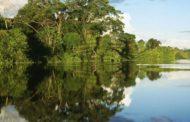 جنگل مانگرو (حرا)