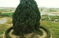 سرو ابرکوه یزد ، کهنسال ترین موجود زنده جهان