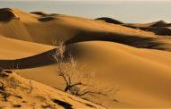 گشت و گذار در دریای شنی کویر مصر