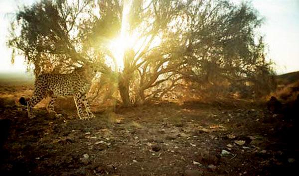 پارک ملی کویر، آفریقای کوچک ایران