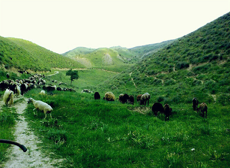 روستای ایدلیک