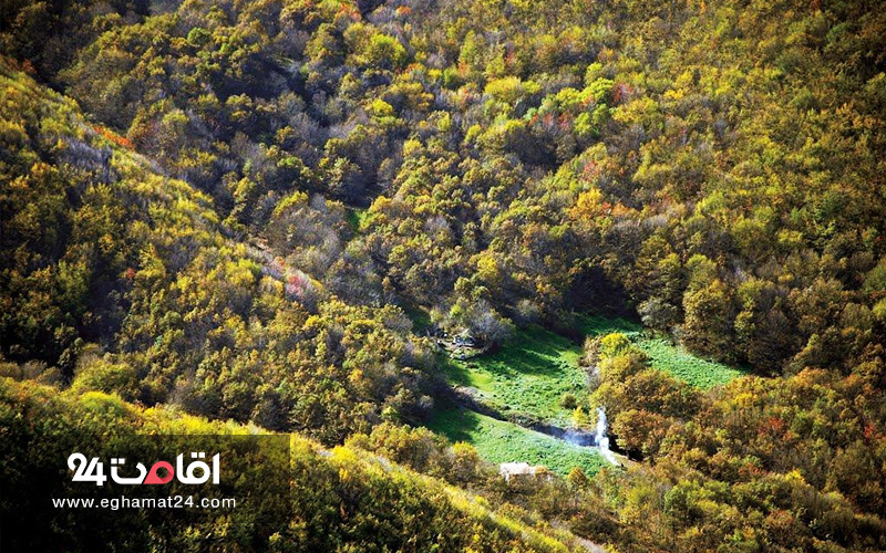 جنگل پیر داوود