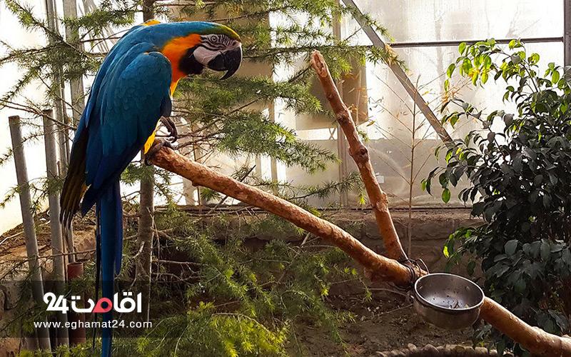 باغ وحش و باغ پرندگان تبریز