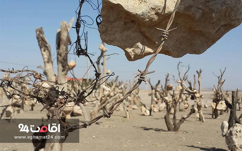 باغ سنگی سیرجان : میوه های سنگی باغ درویش خان