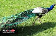 باغ پرندگان تهران ، بزرگترین باغ پرندگان ایران
