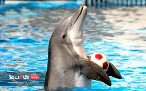 پارک دلفین های تهران