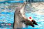 پارک دلفین های تهران ؛ مرتفع ترین دلیفیناریوم جهان