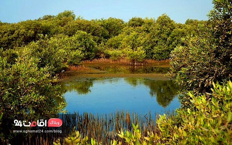 جنگل حرا قشم ؛ جزیره ای با عجایب هفتگانه