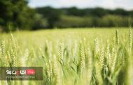 اطلاعات خواندنی راجع به گردشگری کشاورزی