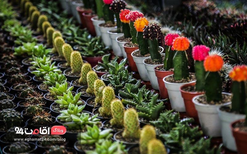 معرفی بازارهای گل تهران