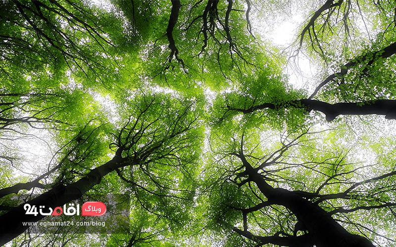 معرفی جنگل های تهران
