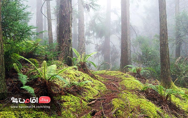 جنگل های تهران