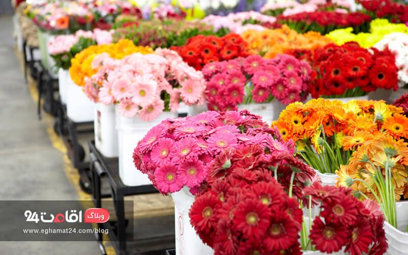 روز گل و گیاه