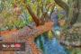 نهاوند، روایتی تاریخی از سرزمین سرآب ها
