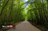جنگل گیسوم، آن جا که دریا و جنگل به هم پیوند می خورند