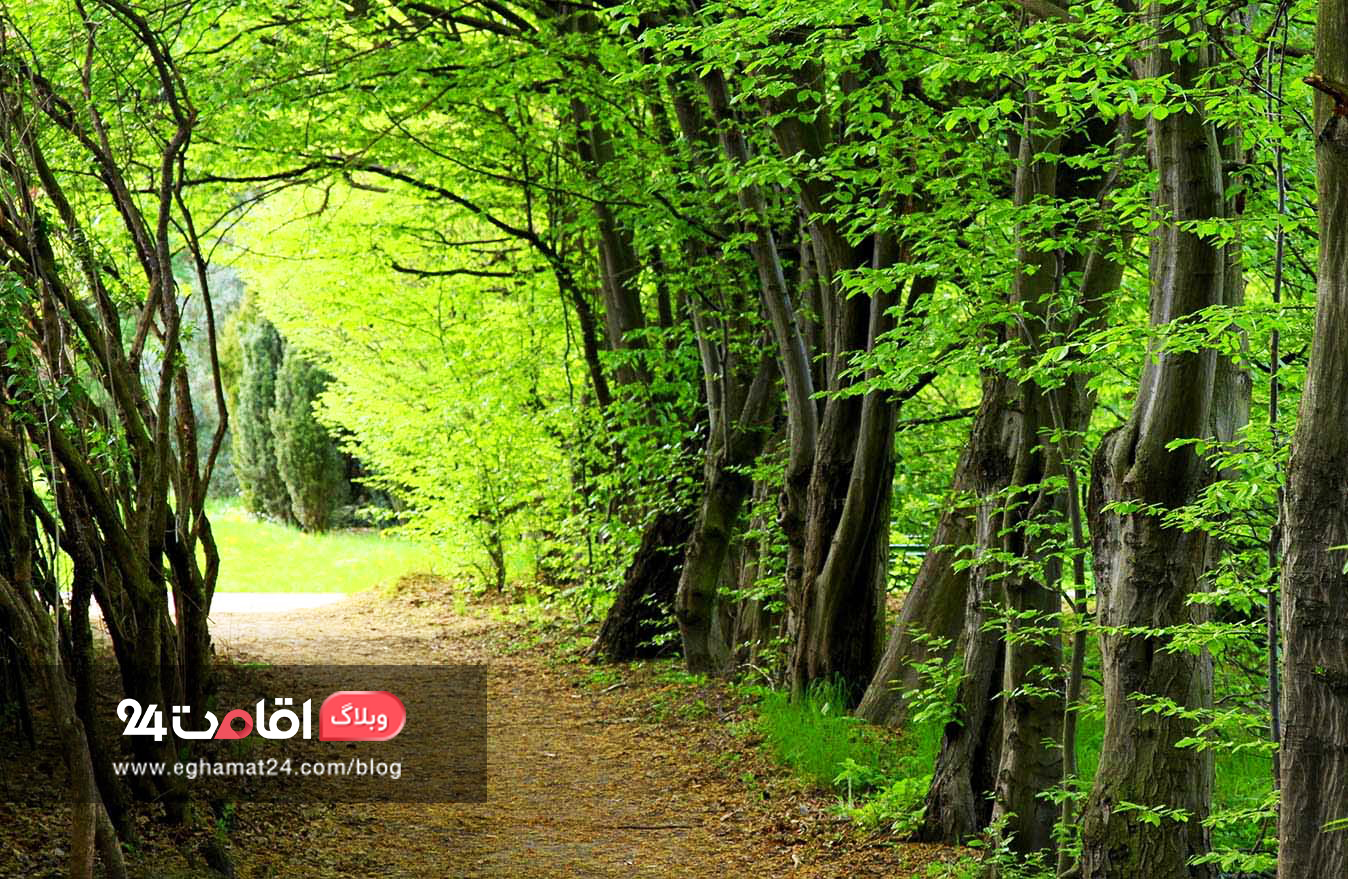hyrcanian-forest-جنگل-هیرکانی