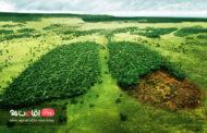 جنگل های آمازون ، ریه های زمین در حال سوختن!