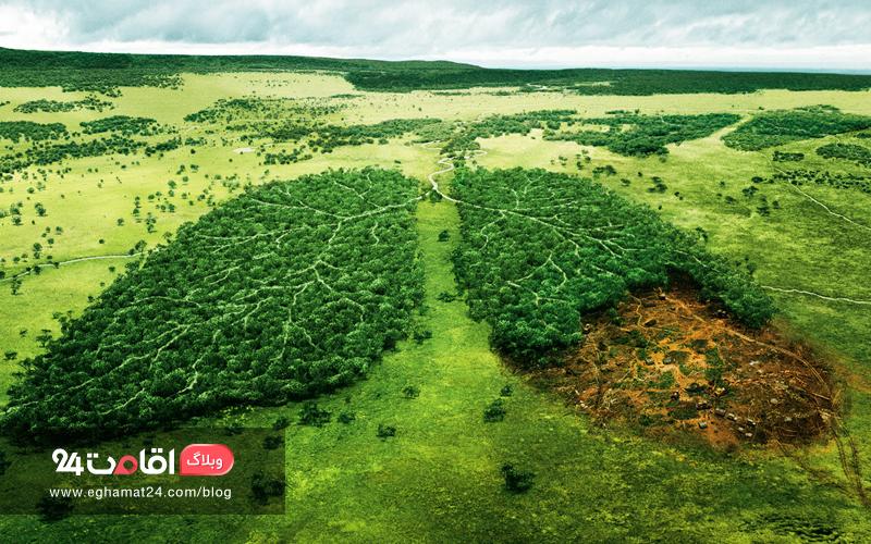 آمازون، ریه های زمین