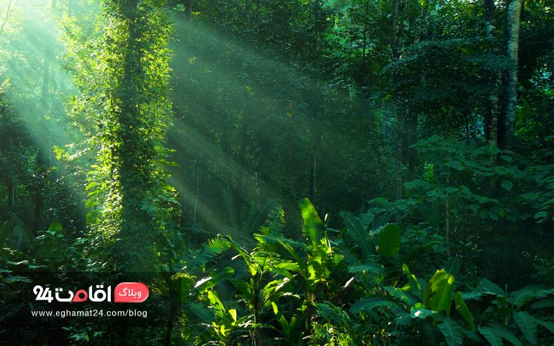 درختان پهن برگ جنگل های آمازون