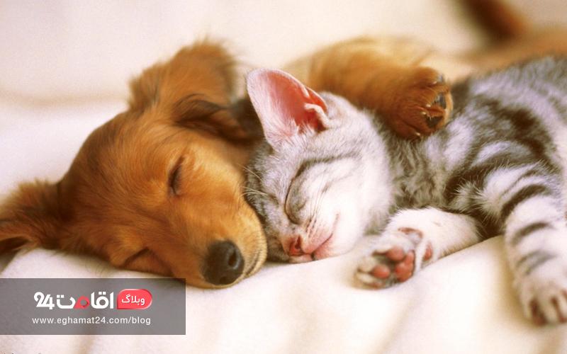 مراقبت از حیوان خانگی - اقامت رایگان