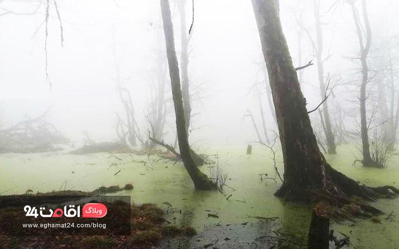 منظره مه گرفته مرداب دیوک
