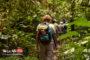 جنگل نوردی در جنگل های ایران