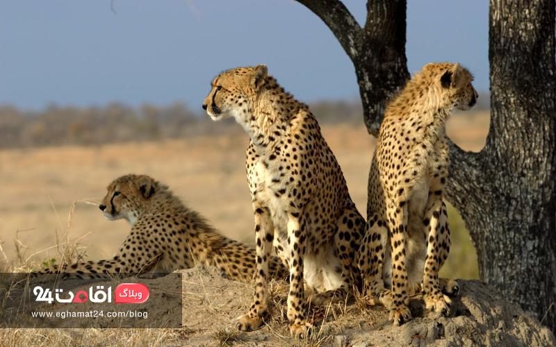 روز جهانی حیات وحش | ما چه وظیفه ای داریم؟