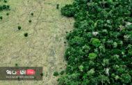 چه عواملی موجب تخریب جنگل ها می شوند؟