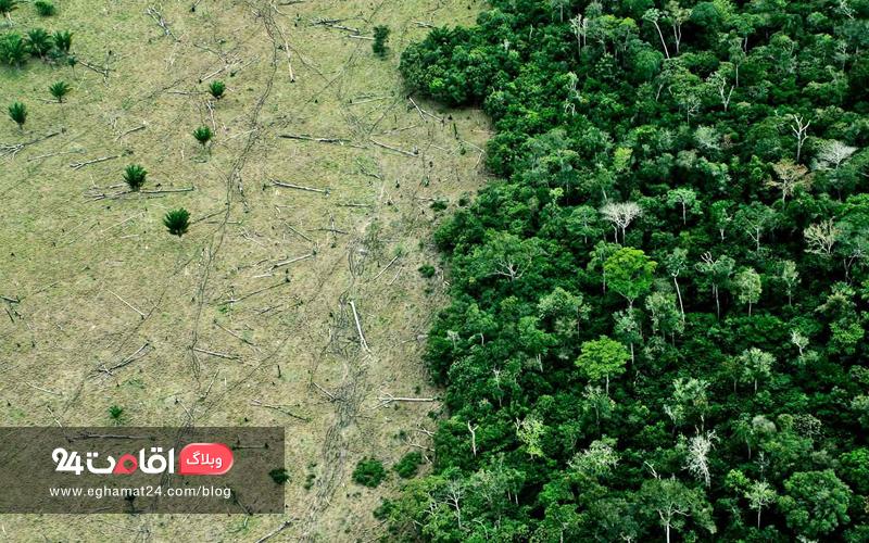 تخریب جنگل ها