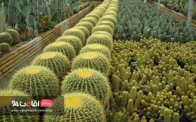 گل و گیاه تزئینی محلات