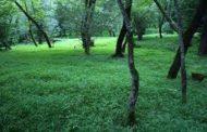 پارک جنگلی فین چالوس کجاست!