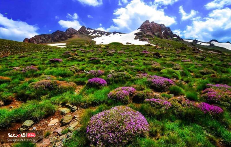 قله دالامپر